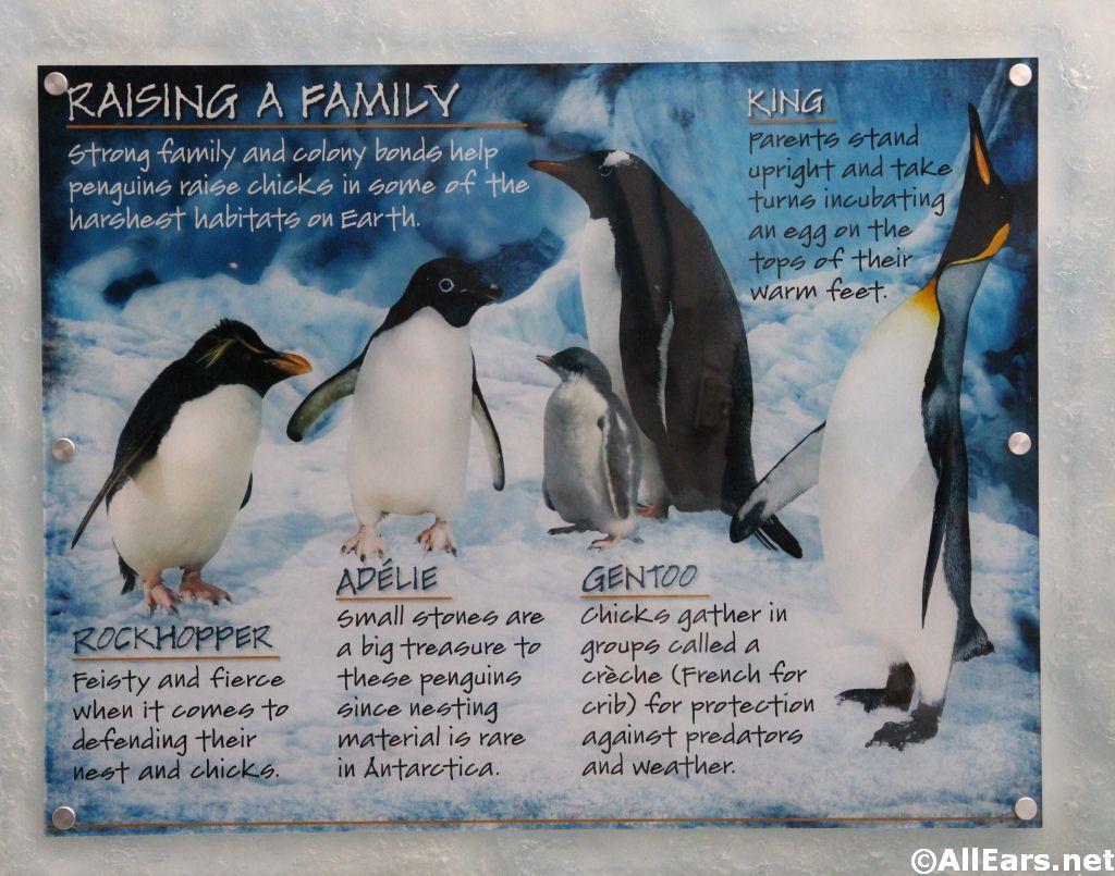 Seaworld S Antarctica Empire Of The Penguin Opens Allears Net