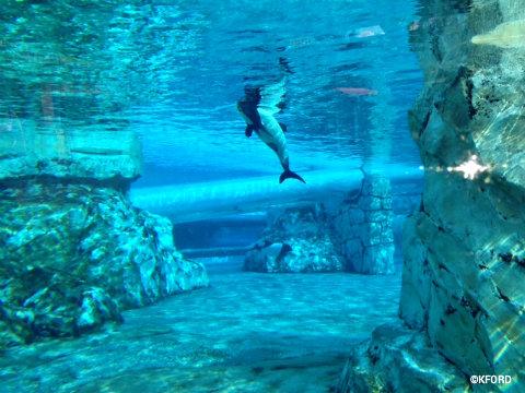 aquatica-commersons-dolphin.jpg