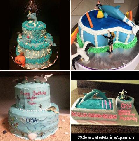 clearwater-marine-aquarium-birthday-cakes-winter-hope.jpg