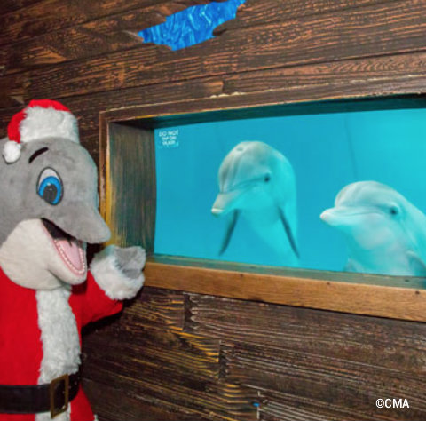 clearwater-marine-aquarium-santa-dolphin-mascot.jpg