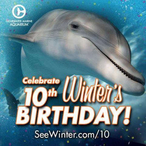 clearwater-marine-aquarium-winter-birthday-10.jpg