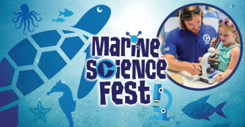clearwater-marine-aquarium-winter-dolphin-marine-science-fest.jpg