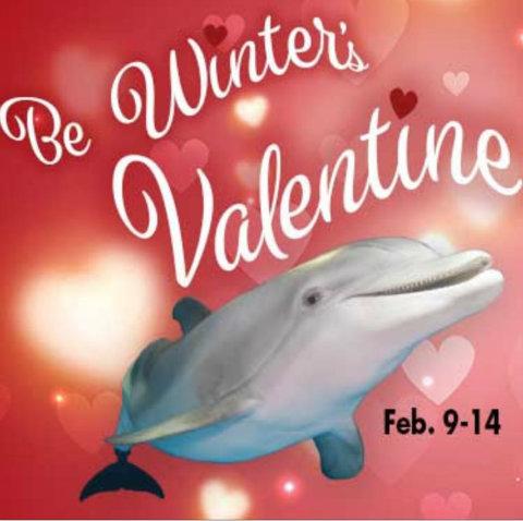clearwater-marine-aquarium-winter-dolphin-valentine.jpg