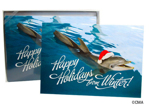 clearwater-marine-aquarium-winter-holiday-cards.jpg