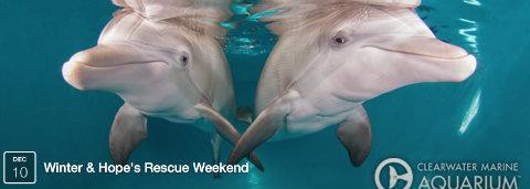 clearwater-marine-aquarium-winter-hope-rescue-anniversaries.jpg