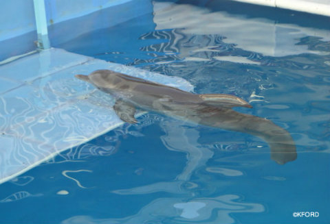 clearwater-marine-aquarium-winter-on-platform.jpg