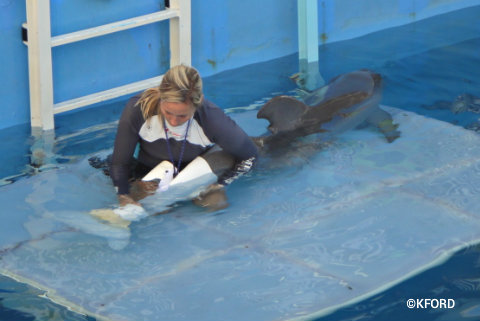 clearwater-marine-aquarium-winter-prosthetic-tale.jpg