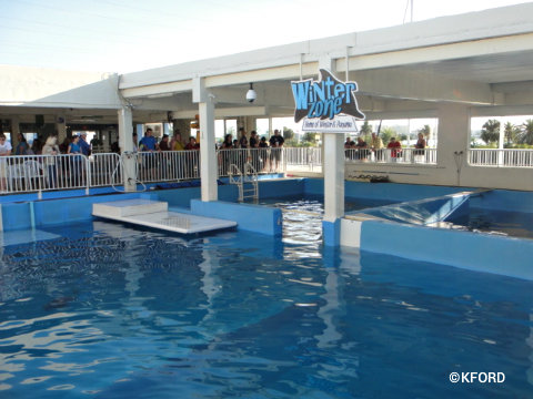 clearwater-marine-aquarium-winters-pool.jpg