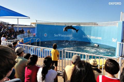 clearwater-marine-hosptial-dolphin-show.jpg