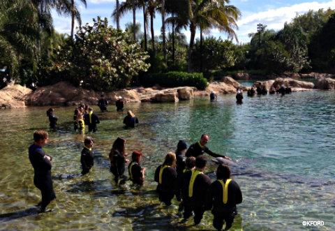 dicovery-cove-dolphin-lagoon.jpg