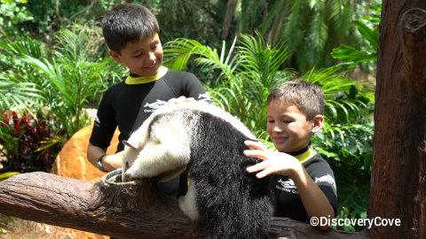 discovery-cove-animal-trek-anteater.jpg