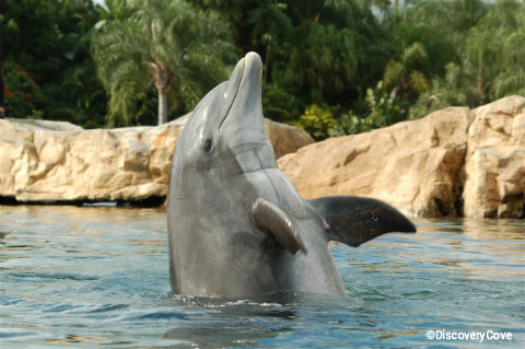 discovery-cove-dolphin-waves.jpg