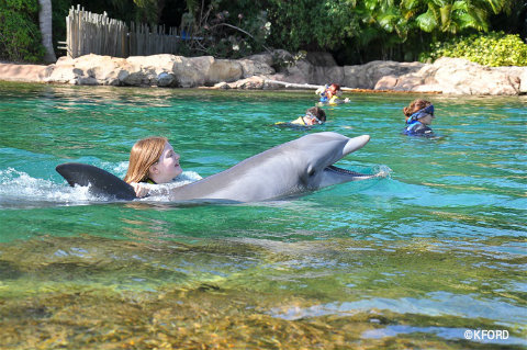 discovery-cove-lauren-swim-with-dolphin.jpg