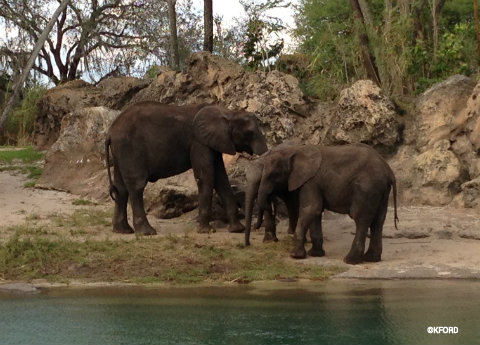 disney-animal-kingdom-elephants.jpg