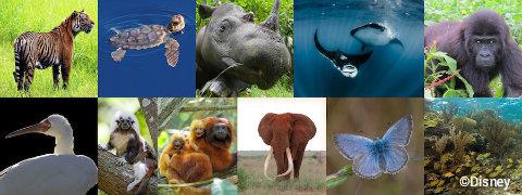 disney-animal-kingdom-pandora-avatar-connect-to-protect.jpg