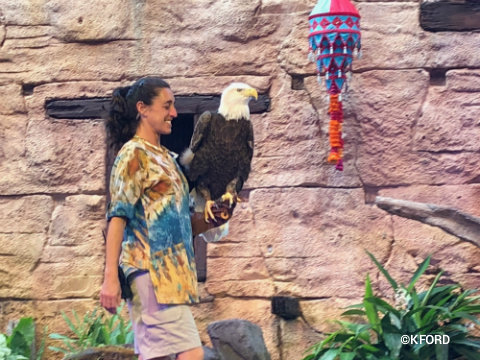 disney-animal-kingdom-up-bird-adventure-bald-eagle.jpg