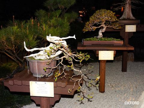 disney-epcot-flower-garden-festival-japanese-mini-gardens.jpg