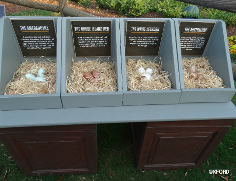 disney-epcot-flower-garden-festival-urban-farm-eats-nesting-egg-boxes.jpg