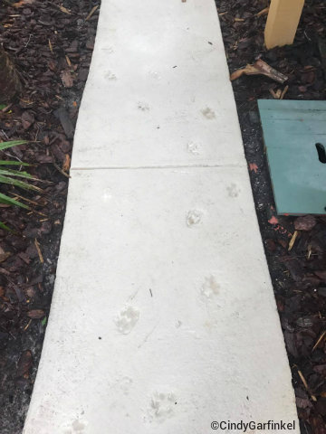 disney-hilton-head-island-shadow-paw-prints.jpg