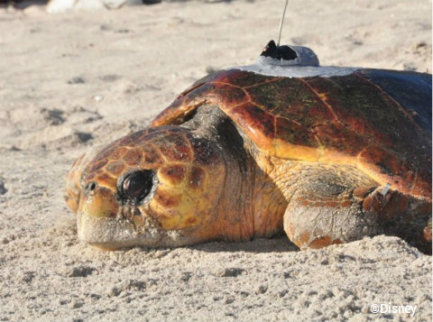 disney-vero-beach-tour-de-turtles-2014-elsa.jpg