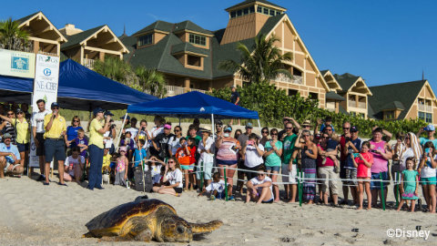 disney-vero-beach-tour-de-turtles-release.jpg