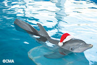 dolphin-tale-2-winter-holiday-camps.jpg