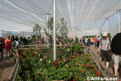 epcot-flower-garden-festival-inside-butterfly-tent.jpg