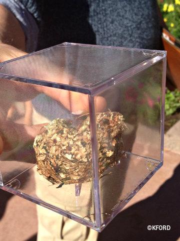 epcot-flower-garden-hummingbird-nest.jpg
