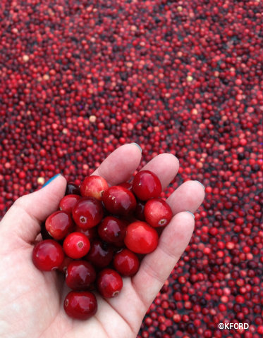 epcot-food-wine-festival-2015-cranberry-bog-cranberries-closeup.jpg