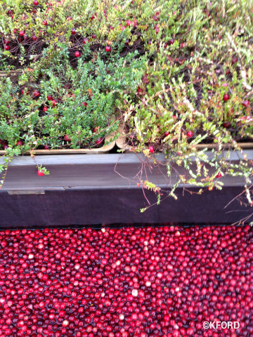 epcot-food-wine-festival-2015-cranberry-bog-plants.jpg