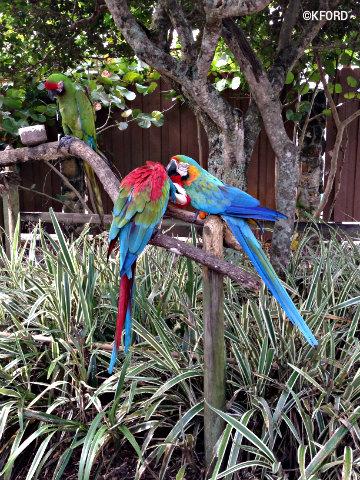 gatorland-parrots.jpg