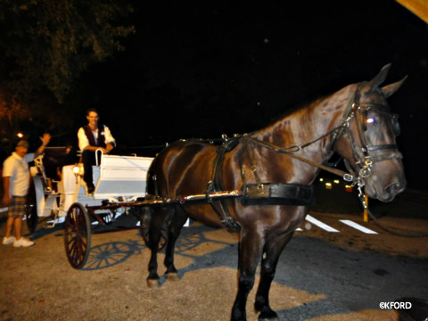 haunted-carriage-ride-horse.jpg