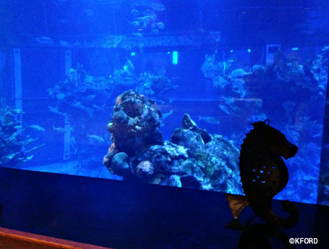 living-seas-salon-aquarium-window.jpg