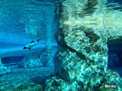 seaworld-aquatica-commersons-dolphins.jpg
