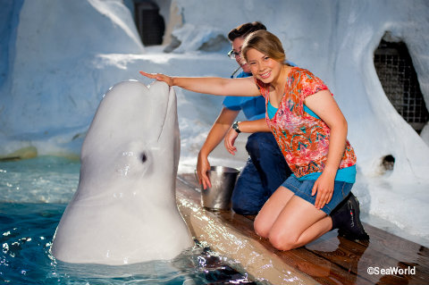 seaworld-bindi-with-beluga-whale.jpg