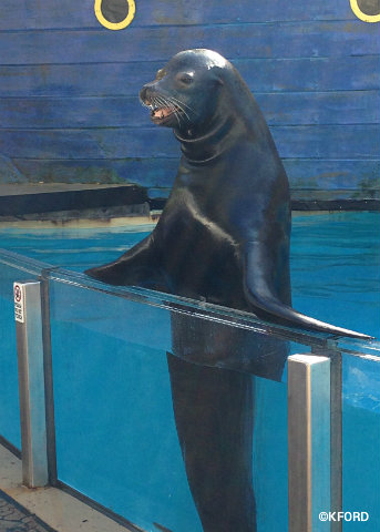 seaworld-clyde-and-seamore-sea-lion.jpg