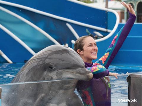 seaworld-dolphin-days-show-closeup.jpg
