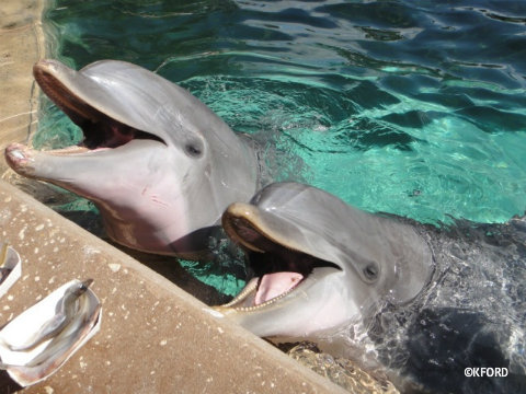 seaworld-dolphin-feeding.jpg