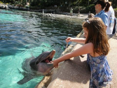 seaworld-dolphin-feeding2.jpg