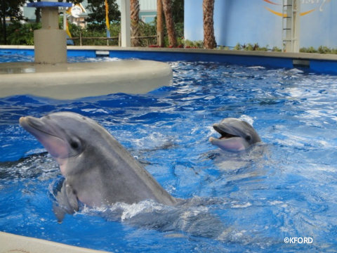 seaworld-dolphin-nursery.jpg