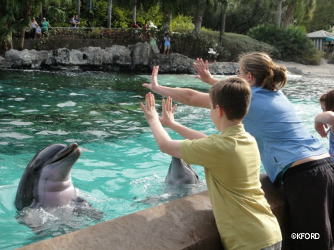 seaworld-dolphins-up-close-tour.jpg