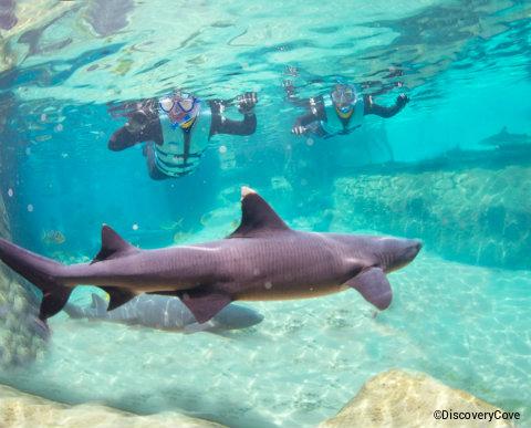 seaworld-orlando-discovery-cove-shark-swim.jpg