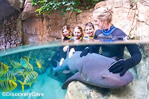 seaworld-orlando-disocvery-cove-shark-swim-interaction.jpg
