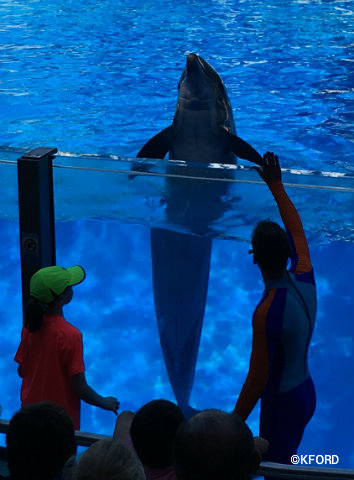 seaworld-orlando-dolphin-days-child-interaction.jpg