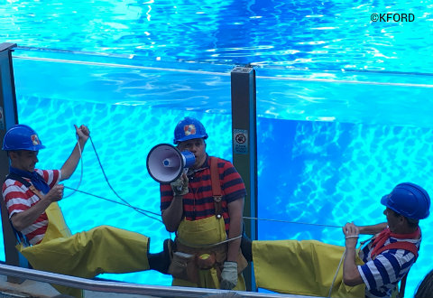 seaworld-orlando-dolphin-days-pre-show.jpg