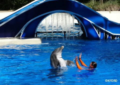 seaworld-orlando-dolphin-days-trainer-dolphin-dancing.jpg