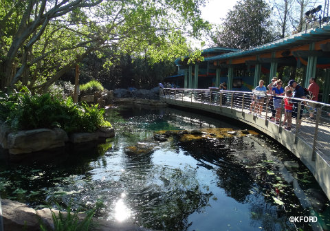 seaworld-orlando-manatee-pool-turtle-trek.jpg
