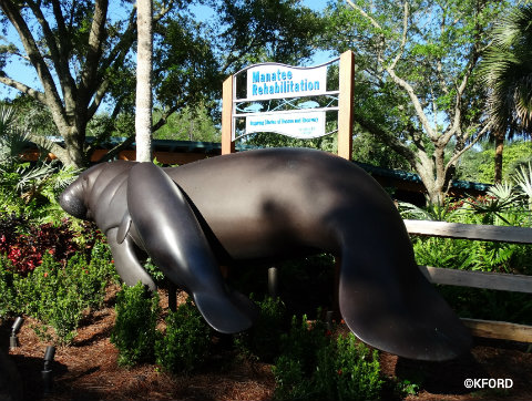 seaworld-orlando-manatee-rehabilitation-area.jpg