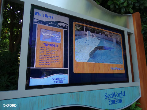 seaworld-orlando-rescued-manatee-rehabilitation-display.jpg