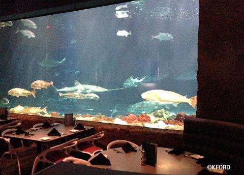 seaworld-orlando-sharks-underwater-grill-mako.jpg